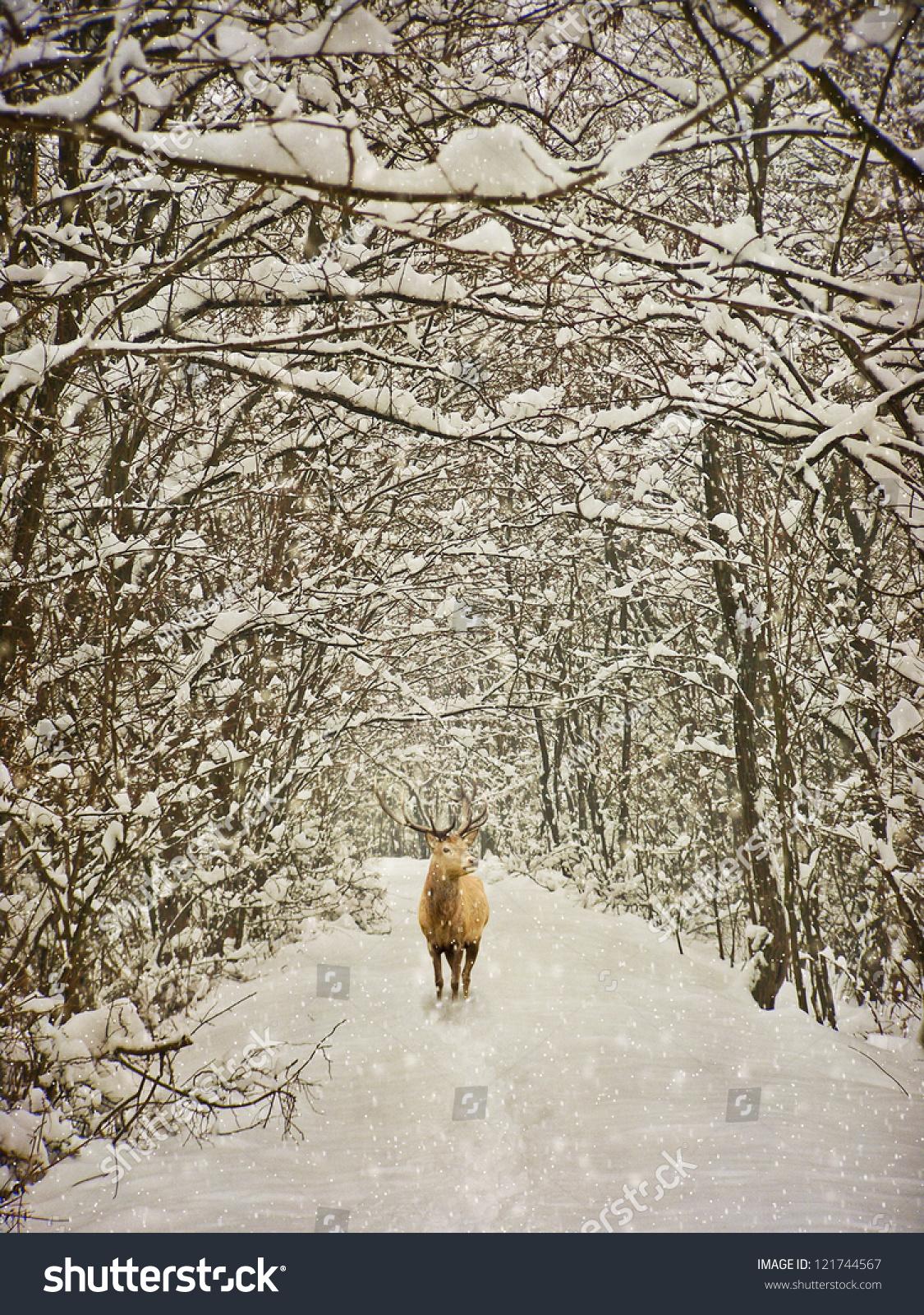 vintage winter photography stock photo 121744567
