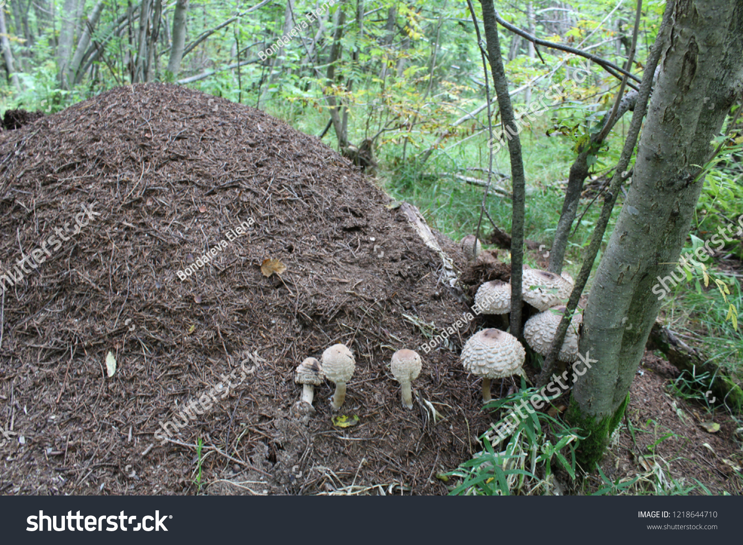 Anthill House Created By Ants They Stock Photo (Edit Now