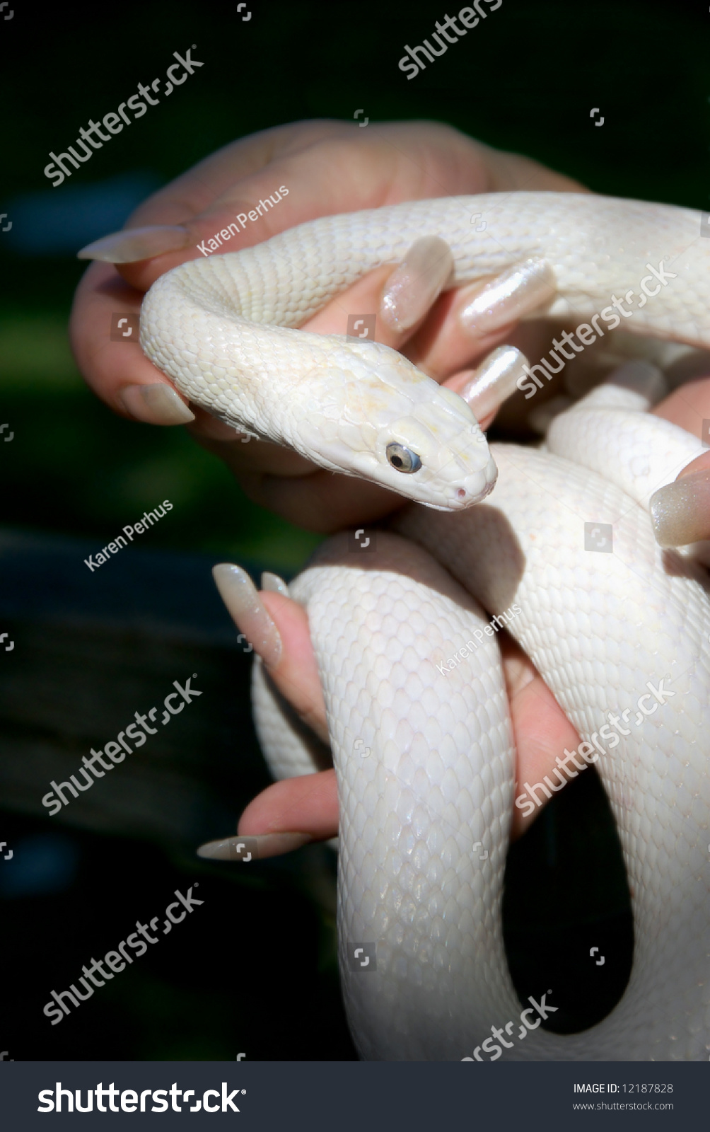 Graceful Feminine Fingers Long White Nails Stock Photo (100% Legal ...