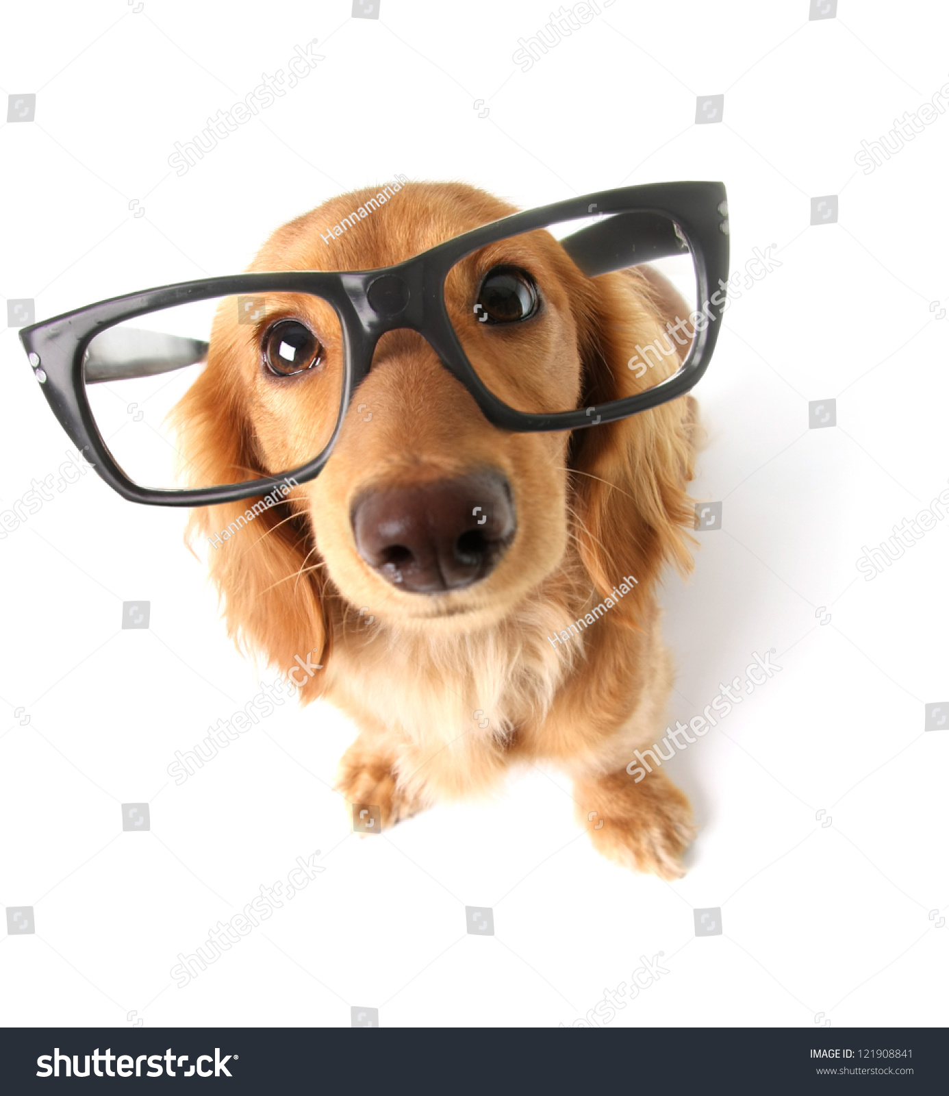 Funny Little Dachshund Wearing Glasses Distorted Stock Photo Edit Now 121908841,Hacks Space Saving Ideas For Small Apartments