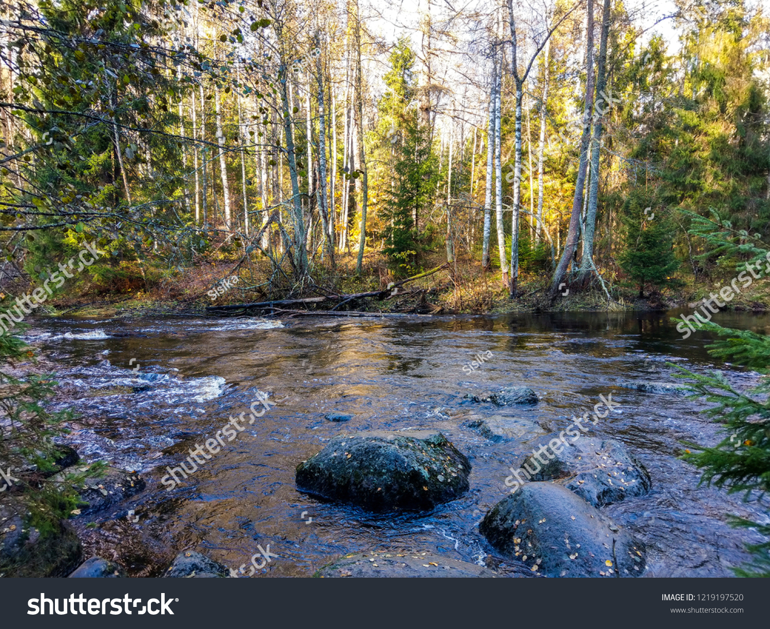 Autumn forest river rocks view. Wild river rocks in autumn forest. Autumn forest river boulders. Autumn forest river rocks landscape #1219197520