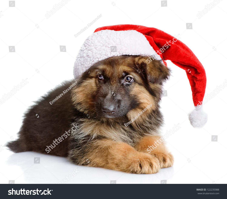 Cute Puppy Dog Red Christmas Santa Stock