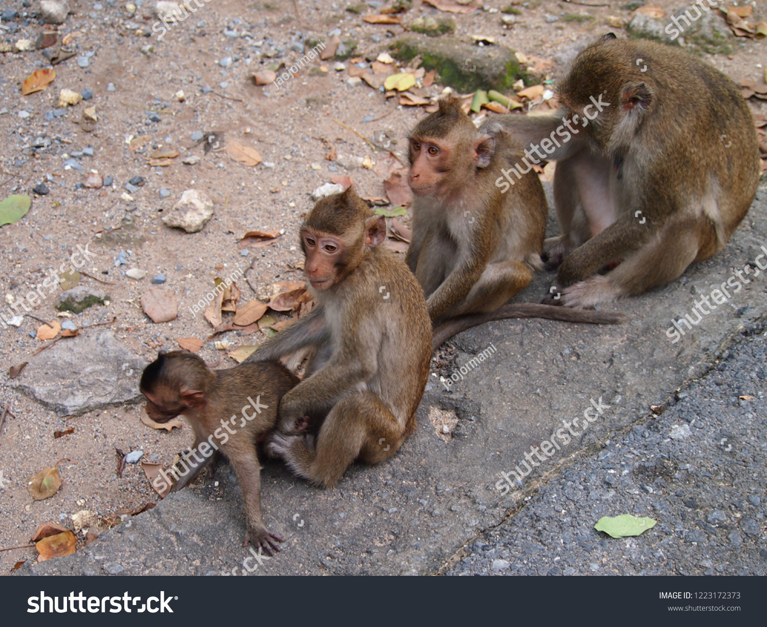 Squirrel Monkey Checking Fleas Tick Baby Stock Photo Edit Now 1223172373