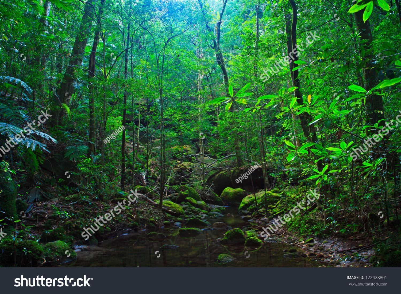 Asian Tropical Rainforest 24