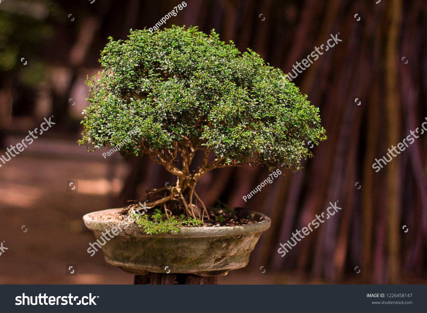Collected Tree Bonsai Stock Photo Edit Now 1226458147