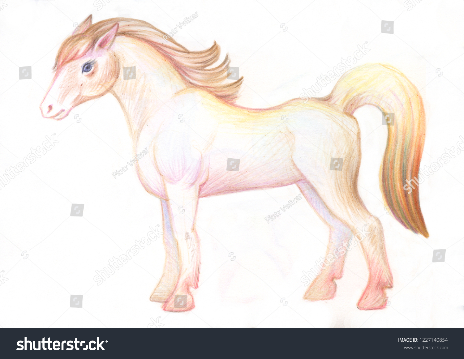 Pencil drawing illustration for children image of animals with colored pencils white young