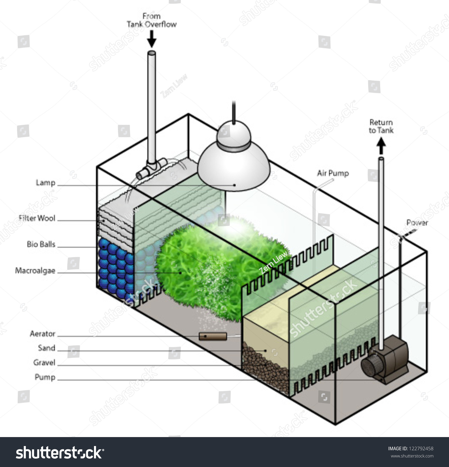 Refugium filter setup aquarium stock vector 122792458 for Pond filter setup diagram