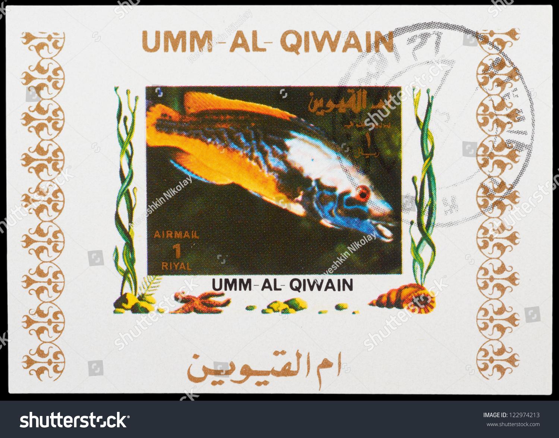 Fish aquarium in umm al quwain -  Umm Al Quwain Preview Save To A Lightbox