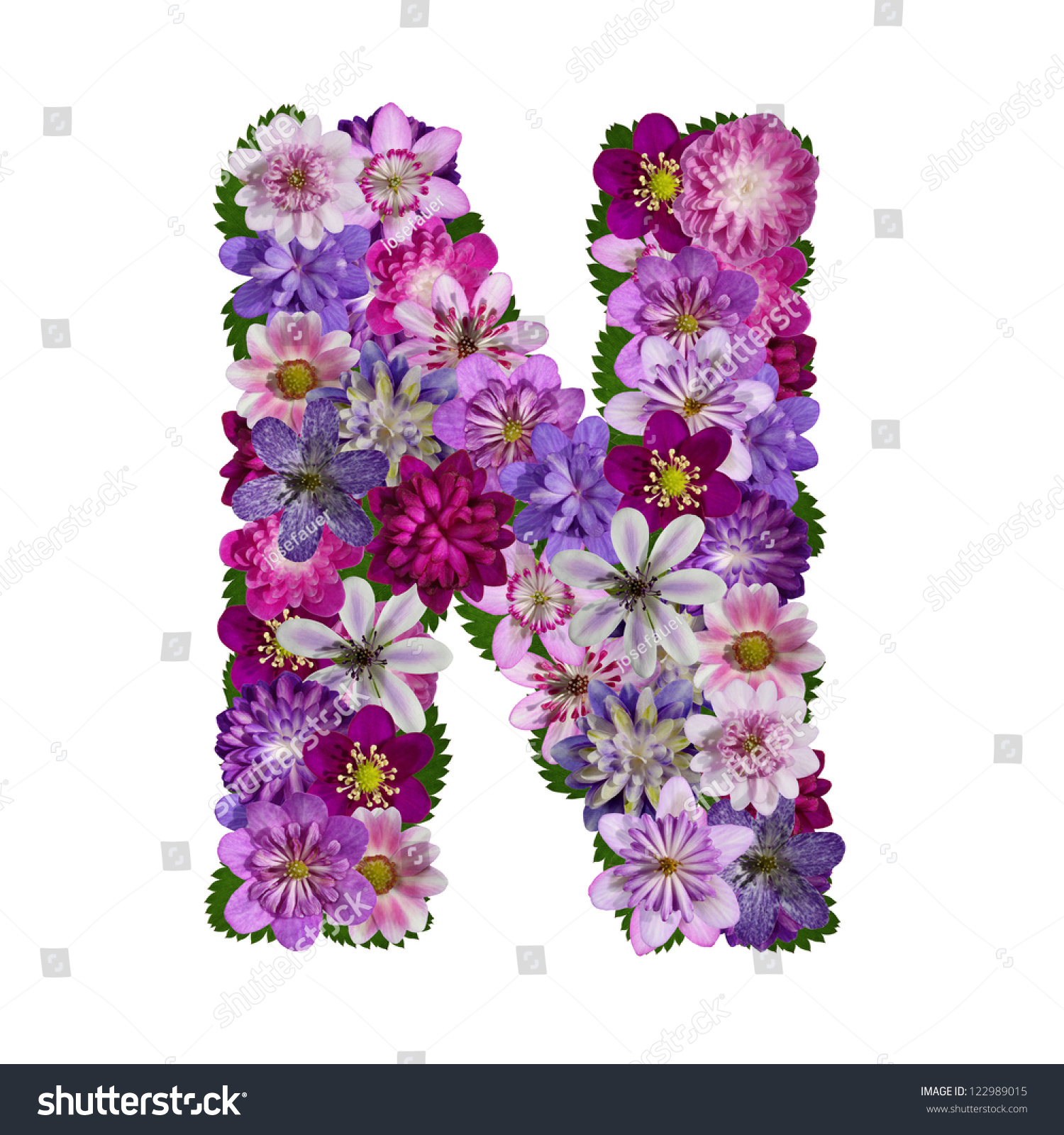 Pictures Of Flowers That Start With The Letter L