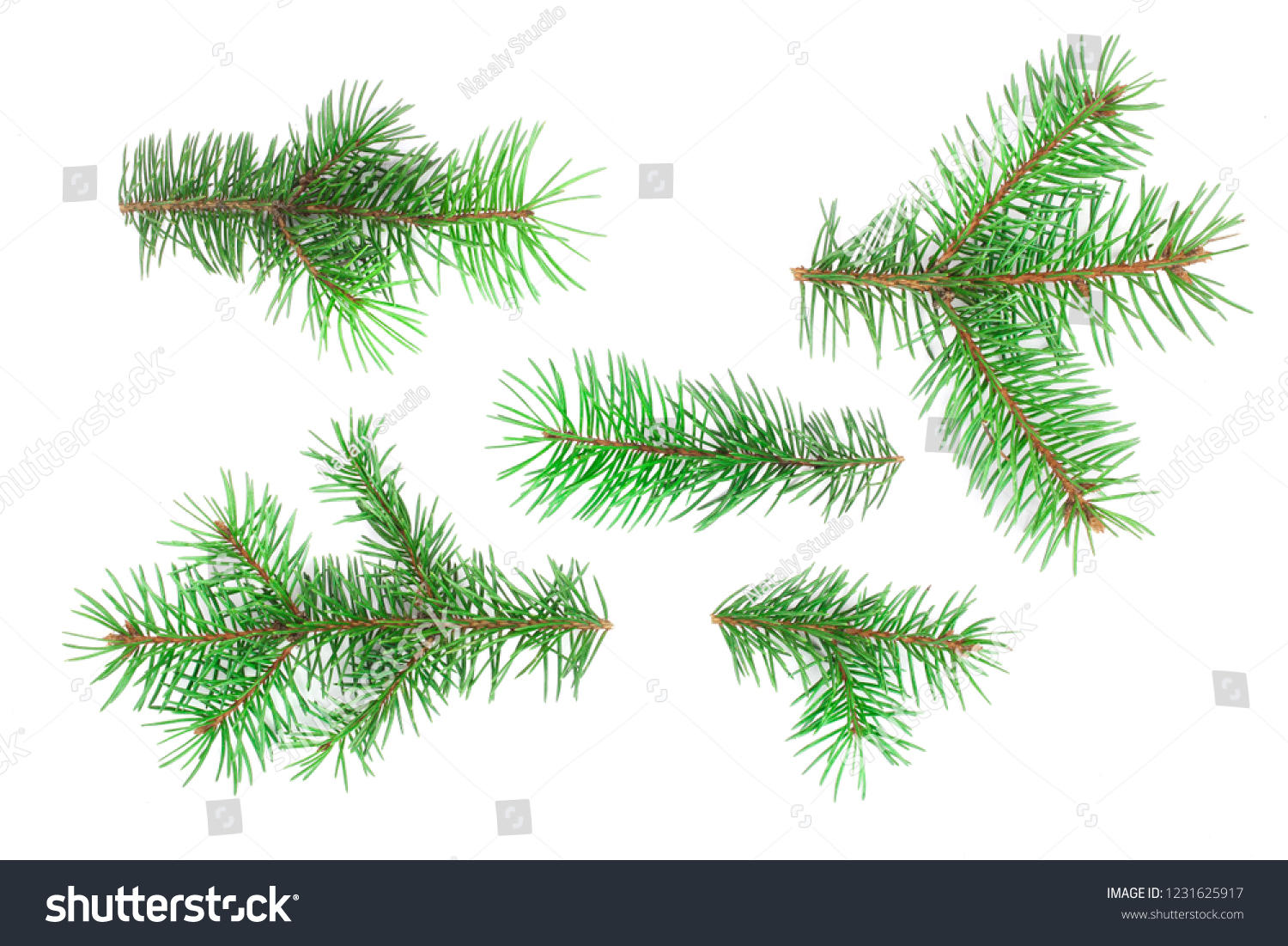 Fir tree branch isolated on white background. Christmas background. Top view #1231625917