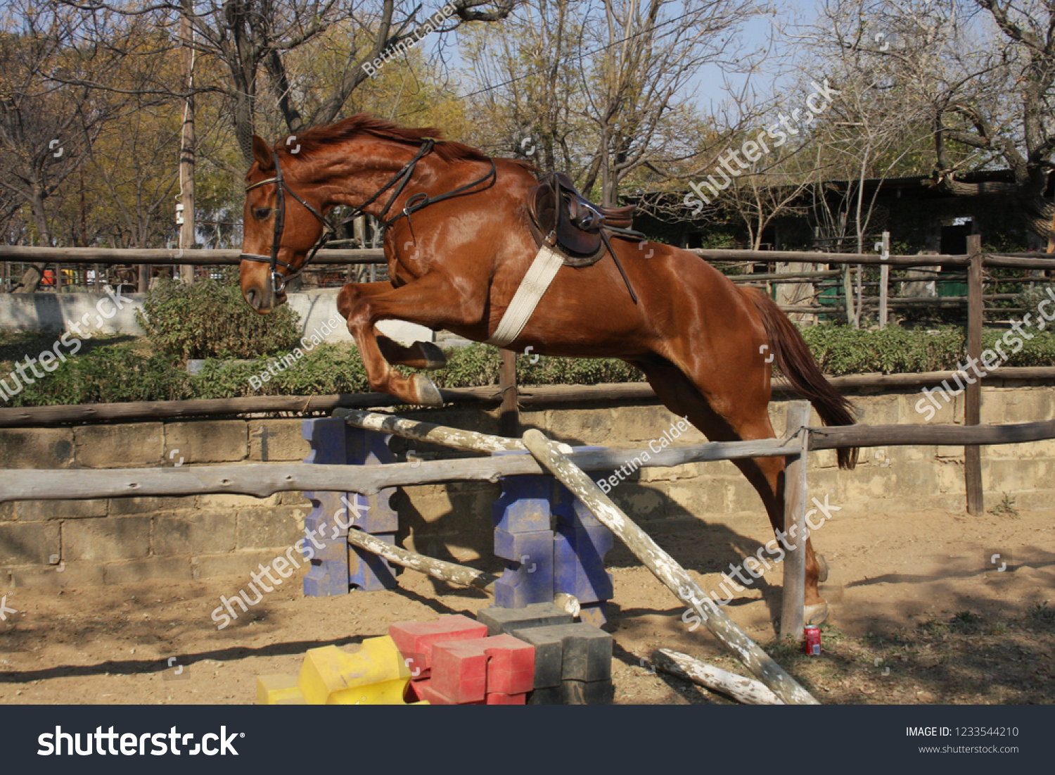 Chestnut Horse Loose Jumping Stock Photo Edit Now 1233544210