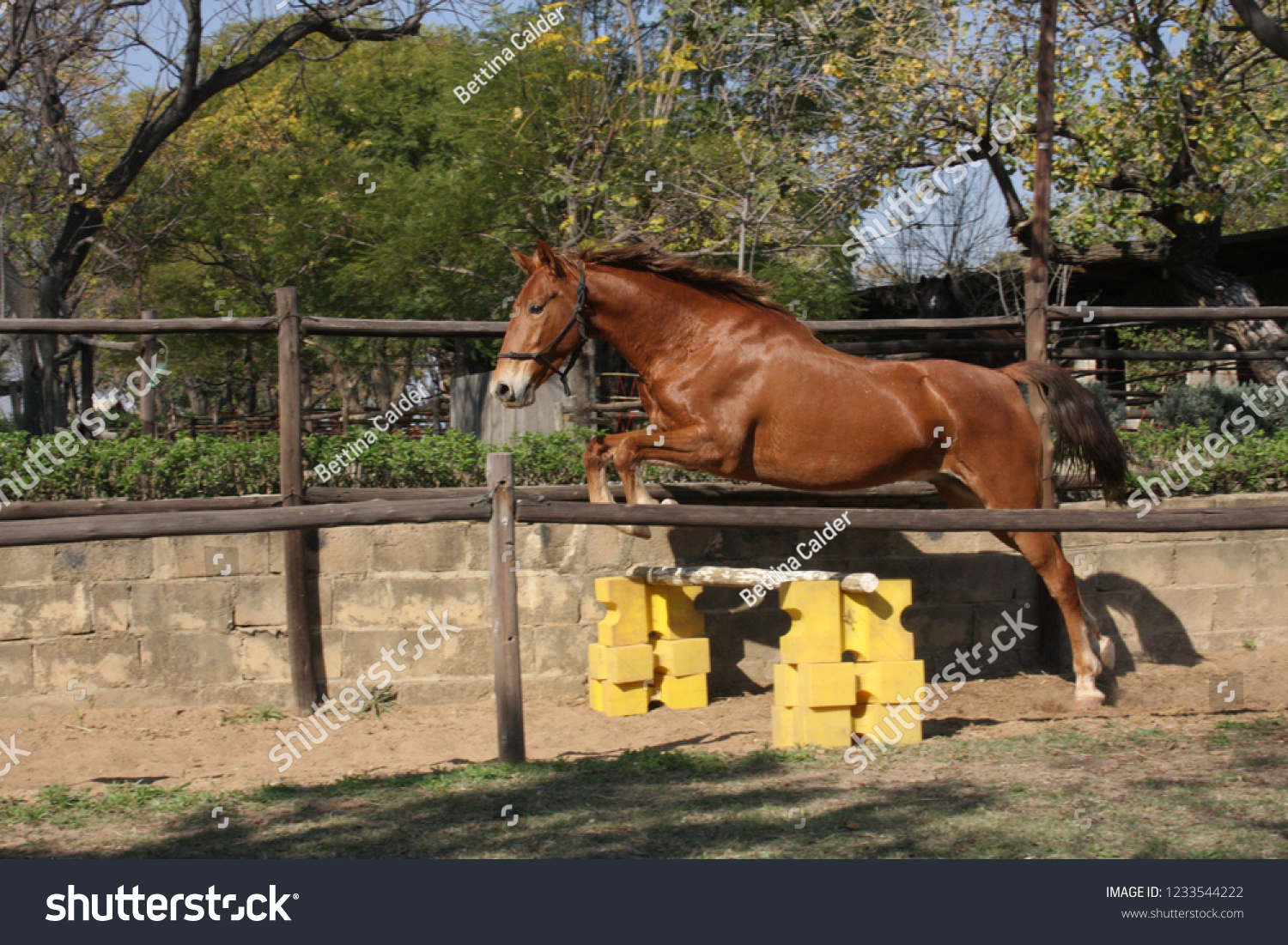 Chestnut Horse Loose Jumping Stock Photo Edit Now 1233544222