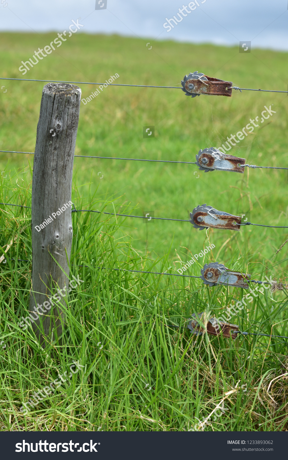 Weathered Wooden Pole Wires Cattle Electric Stock Photo Edit Now Wiring Fence And Of With Green Farmland In Background