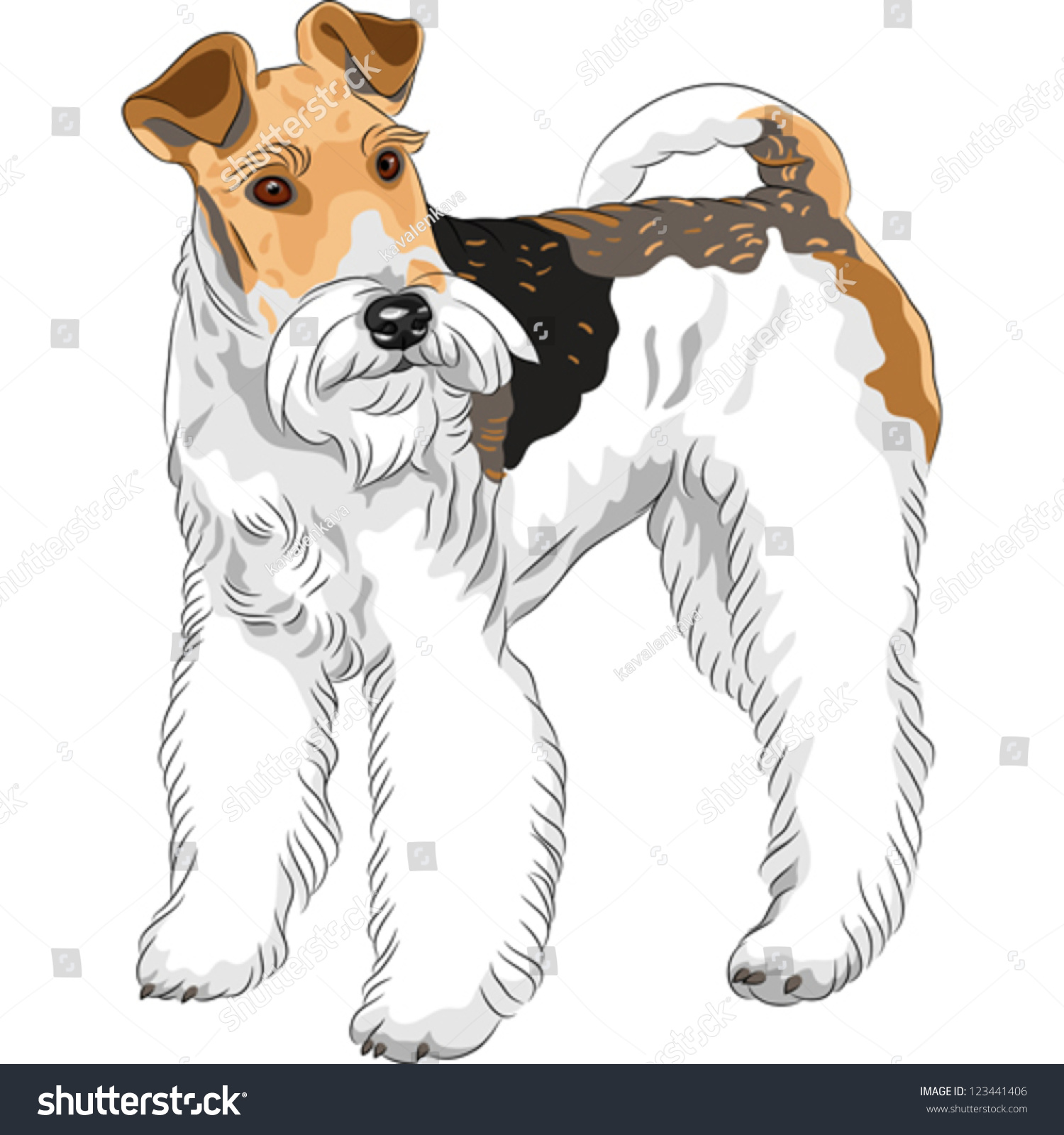 Wire Haired Terrier Breeds | Uphairstyle