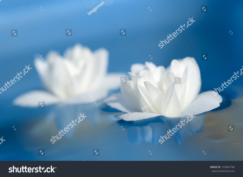Beautiful white jasmine flowers floating on stock photo edit now beautiful white jasmine flowers floating on blue water izmirmasajfo