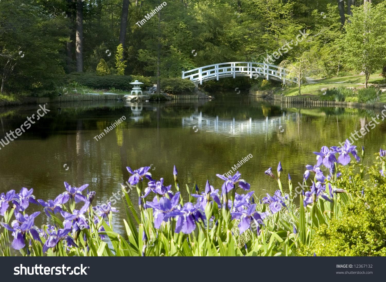 Japanese Zen Garden Bridge Purple Iris Stock Photo Edit Now