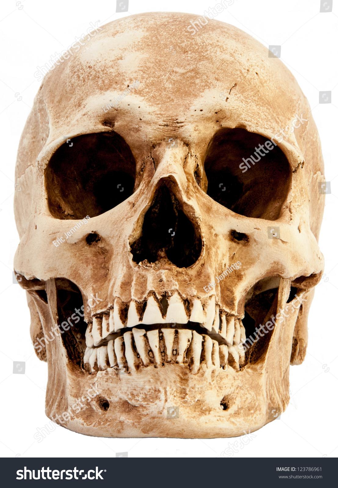 Front View Human Skull Stockfoto Jetzt Bearbeiten 123786961