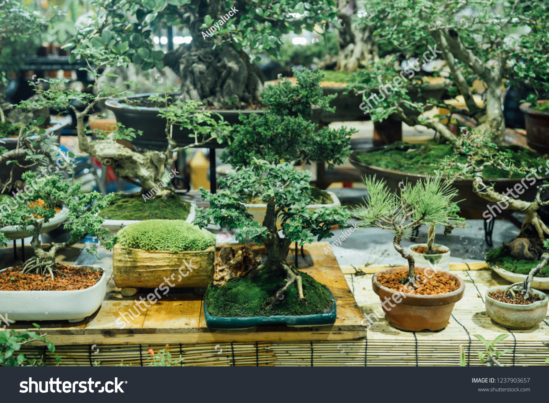 Various Kinds Bonsai Trees Stock Photo Edit Now 1237903657