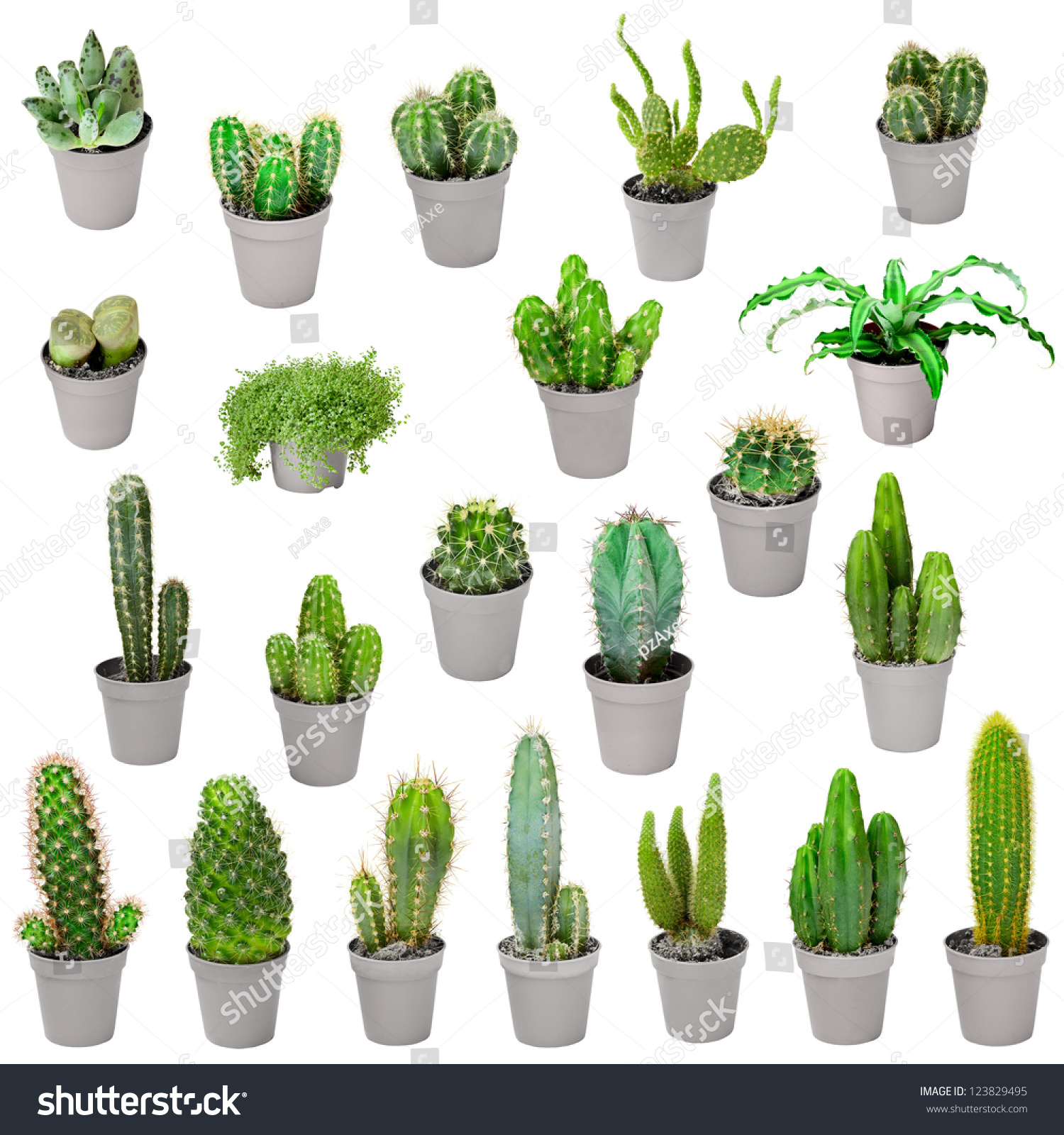 Set Of Indoor Plants In Pots Cacti And Other Succulents