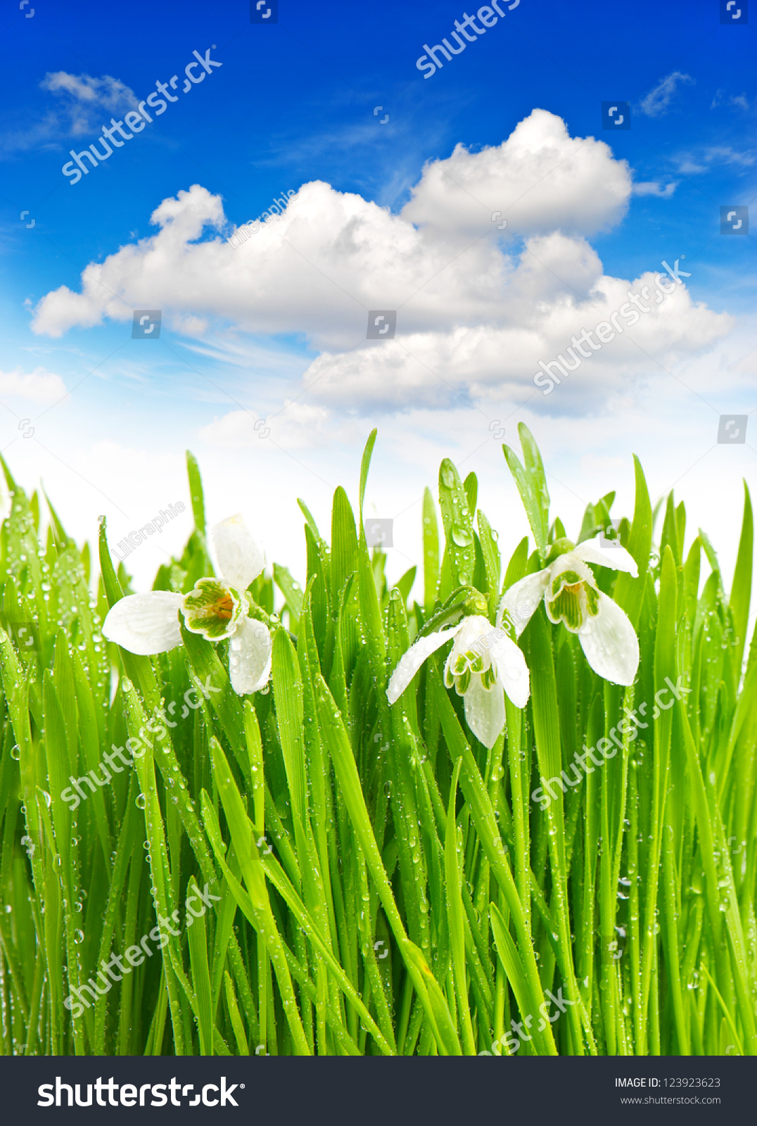 green grass blue sky flowers beautiful green grass blue sky flowers download flowers