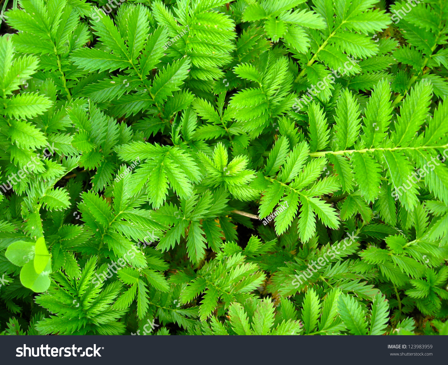 Image Green Background Nice Fresh Leaves Stock Photo