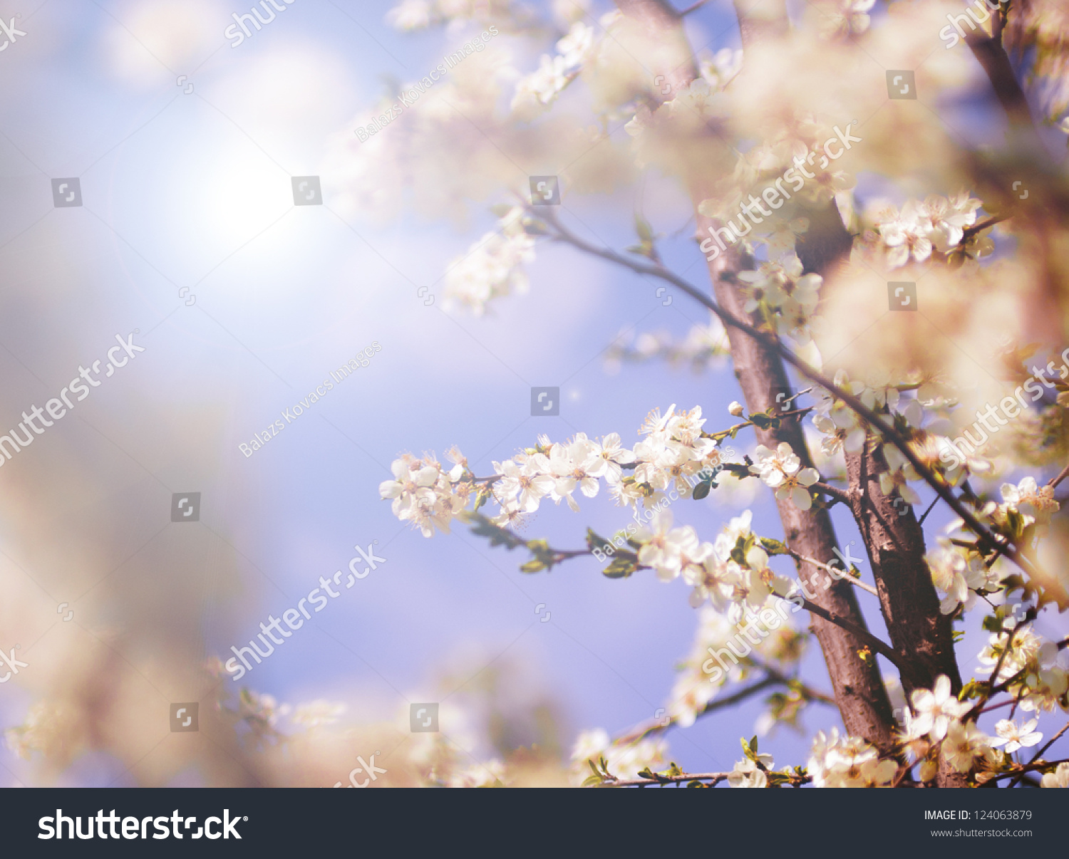 White Tree Flowers Spring Stock Photo Royalty Free 124063879