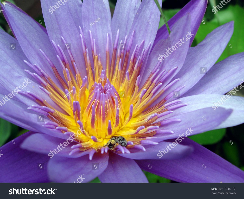 Asian Lotus Flower Ez Canvas