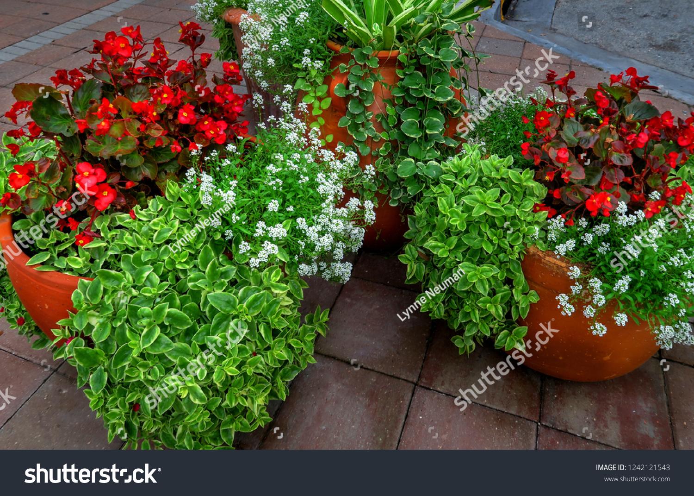 Beautiful Well Kept Outdoor Decorative Plants Stock Photo Edit