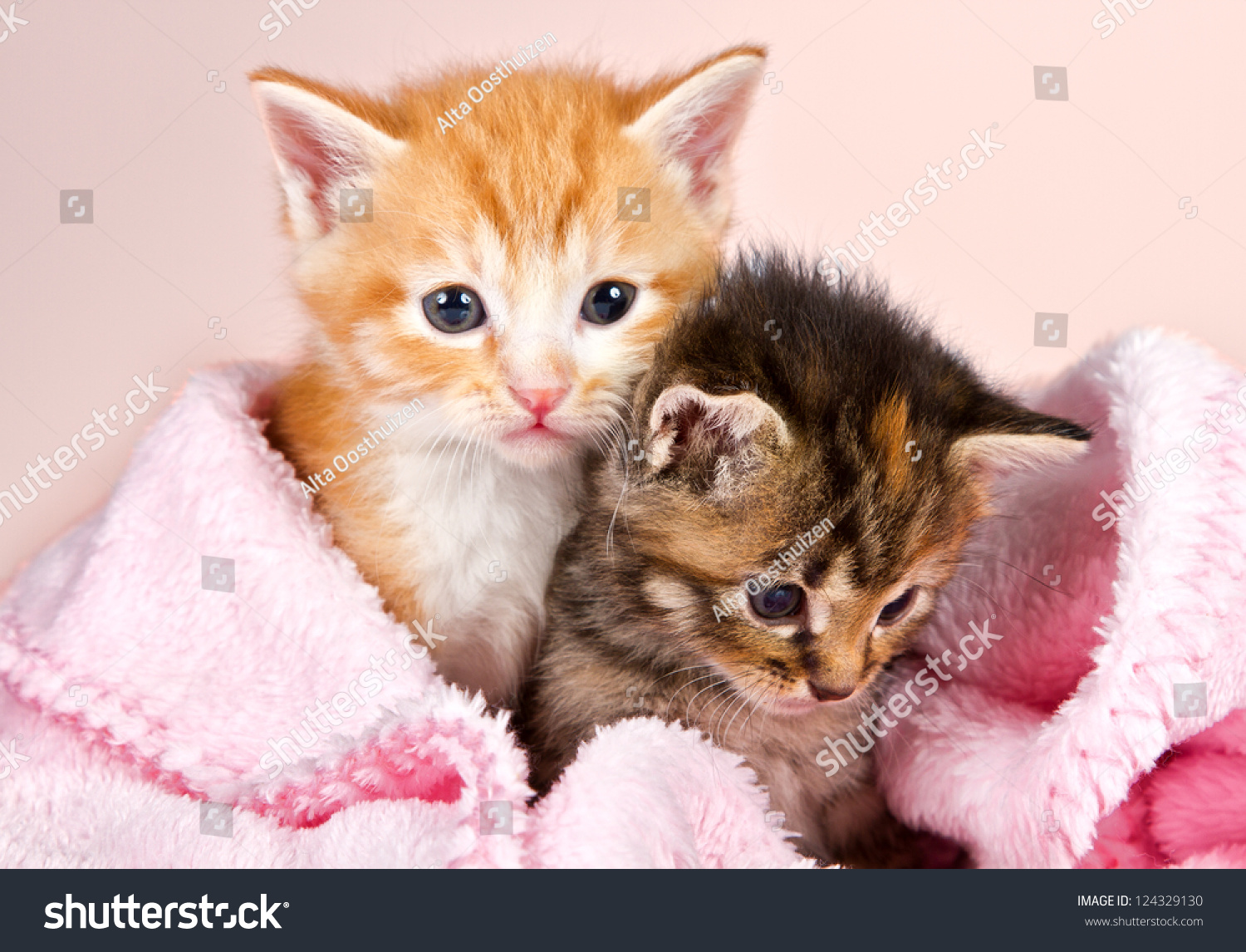baby kittens wrapped in a pink blanket with a pink