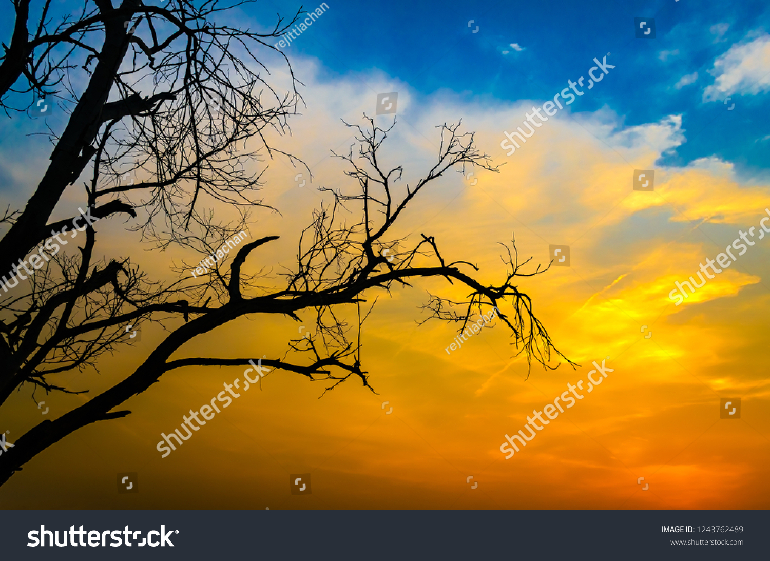 Dry, leafless tree silhouetted against a multicolored sky background.