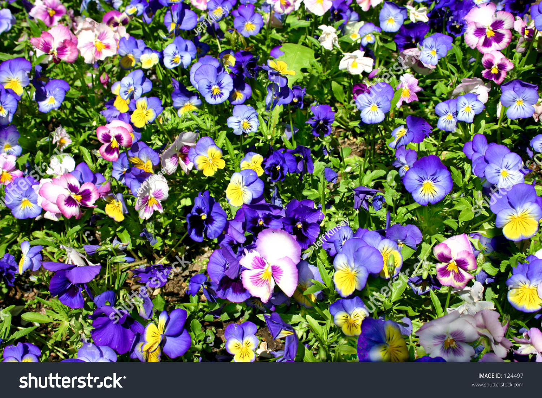 Flower Patch Stock Shutterstock