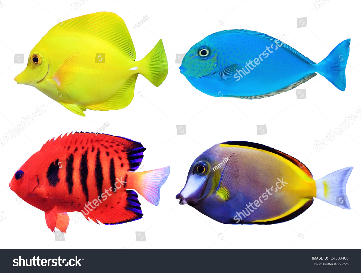 Set tropical sea fish isolated on stock photo 124503400 for Image of fish