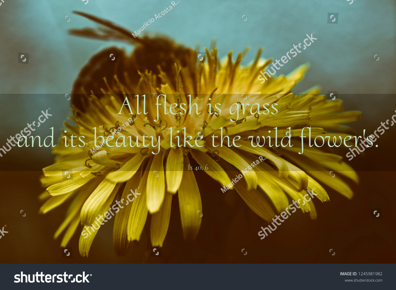 Inspirational Quotes Verses Bible Over Beautiful Stock Photo Edit