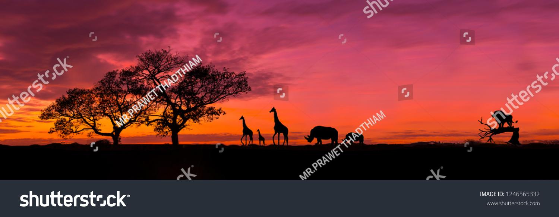 Amazing sunset and sunrise.Panorama silhouette tree in africa with sunset.Tree silhouetted against a setting sun.Dark tree on open field dramatic sunrise.Safari theme.Giraffes , Lion , Rhino.  #1246565332