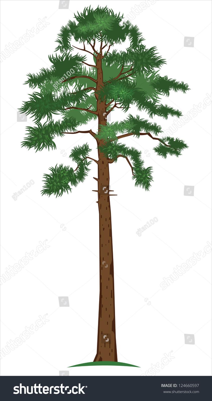 Деревья показать рисунок сосны 3