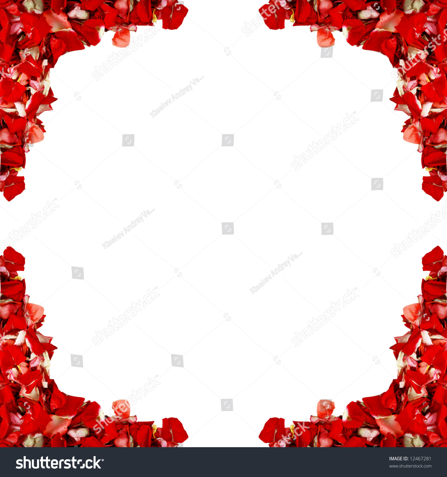 Red gift bows border with clipping path for easy background removing - Red Rose Plants Visiting Card Background