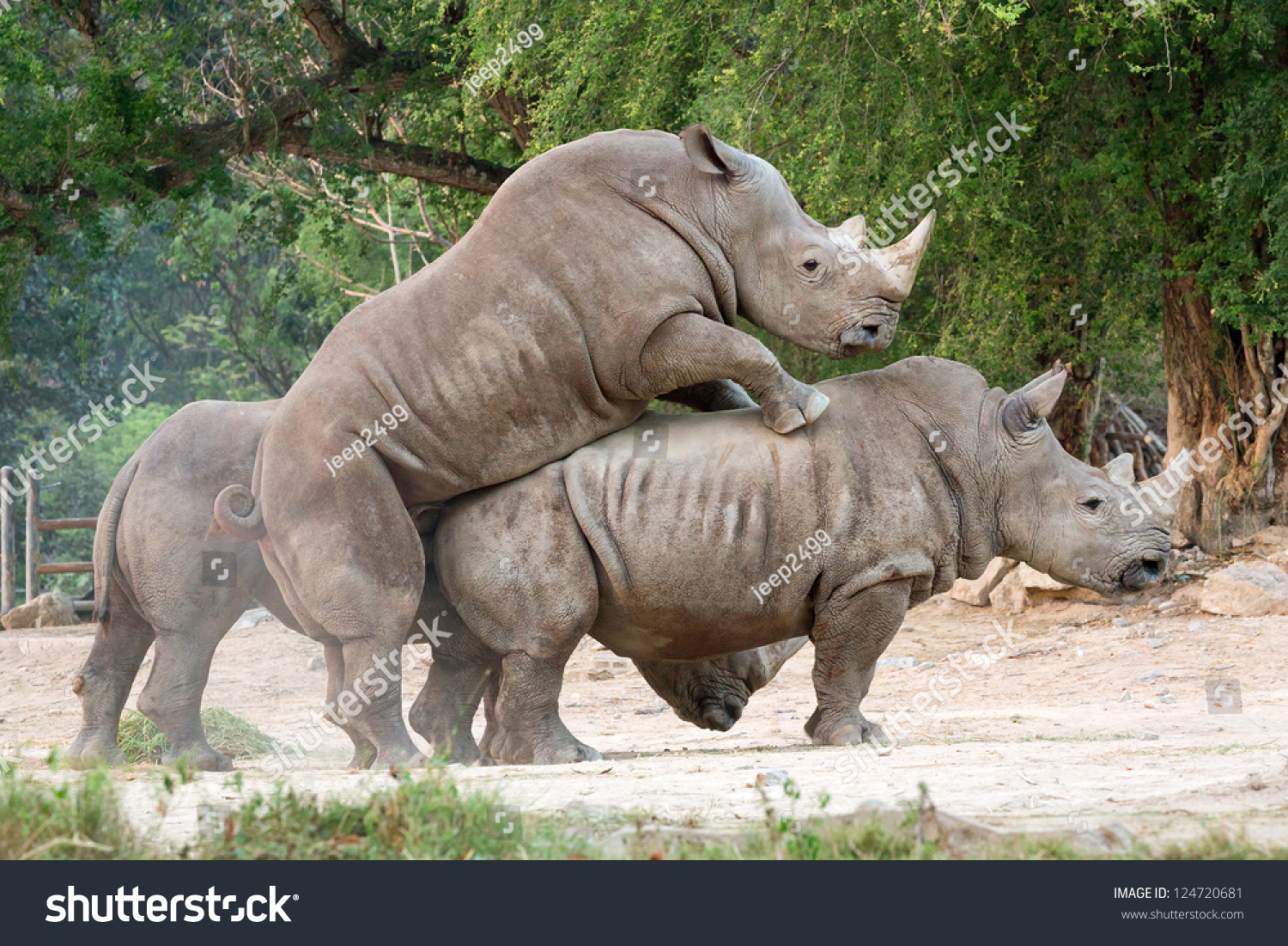 an introduction to the nature of rhinoceros and their endangerment Wild nature is going away and trade in endangered species are combining to erase from our planet the other beings which have given in play to pay for their.
