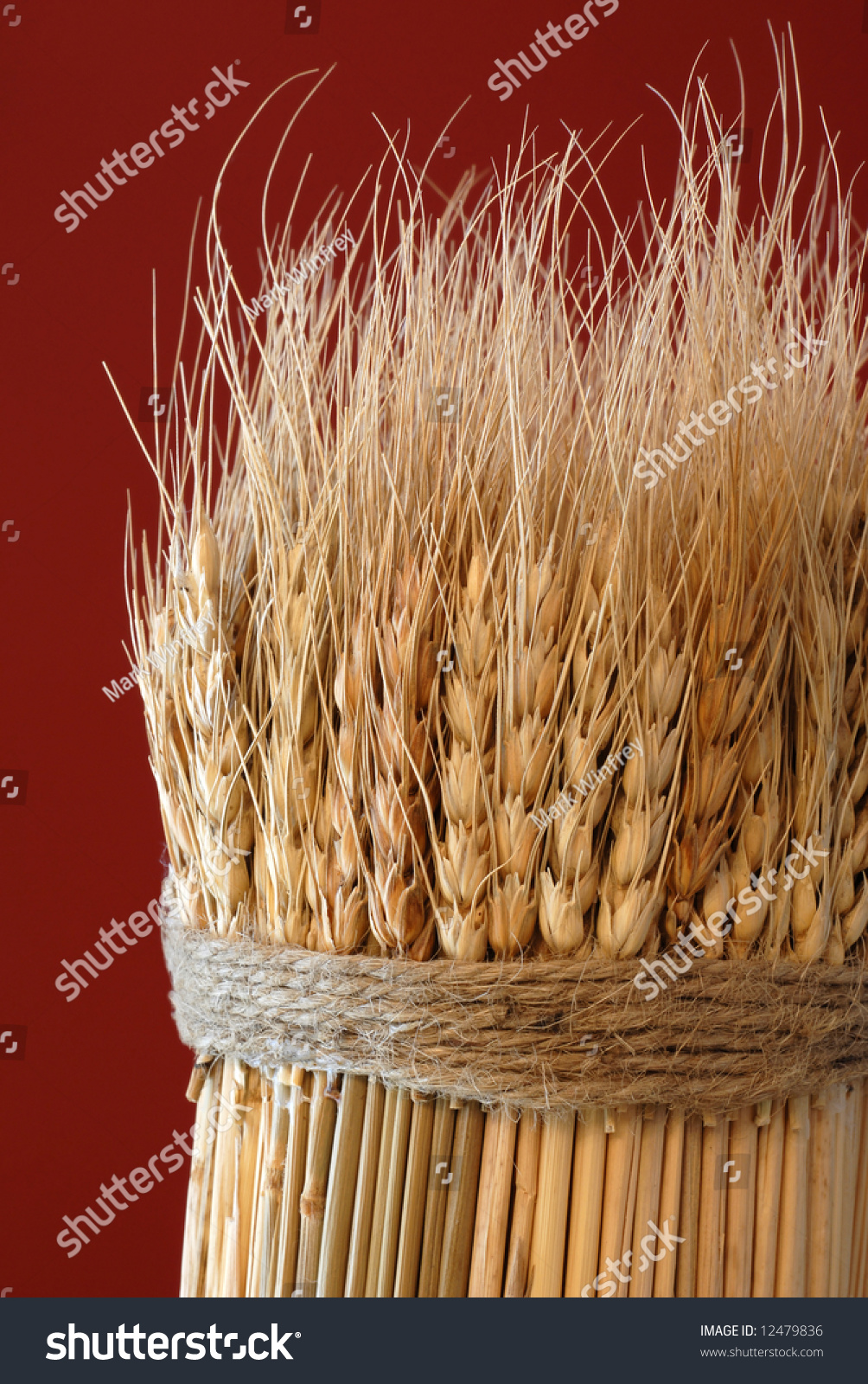 stock-photo-sheaf-of-wheat-against-a-red