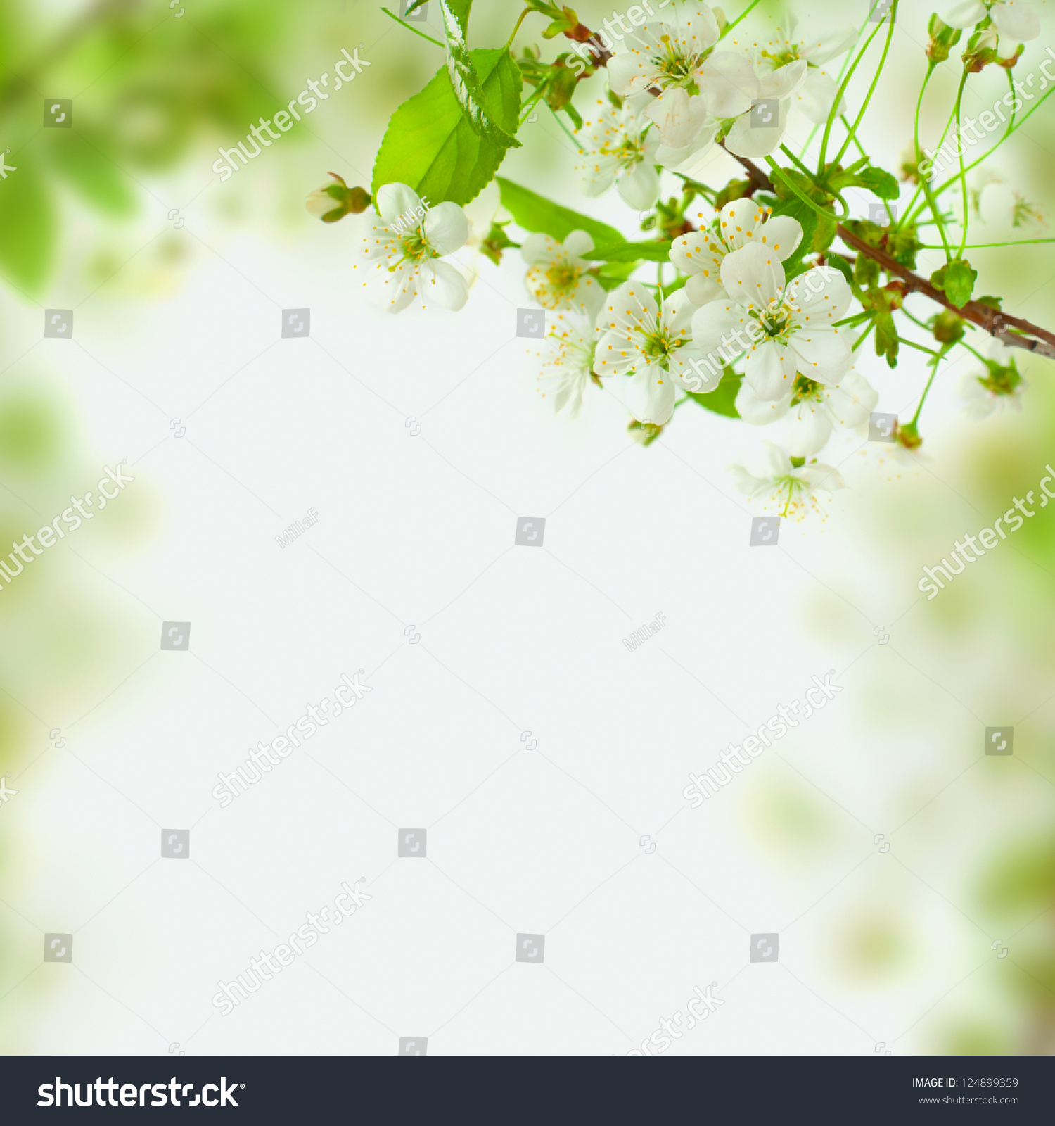 Spring Blossom Background Abstract Floral Border Stock