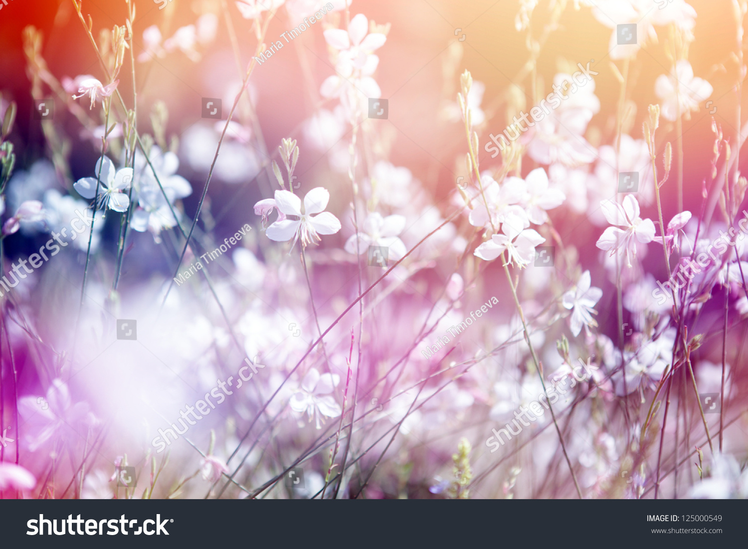Flower Background Beautiful Flowers Made Color Stock Photo Edit Now