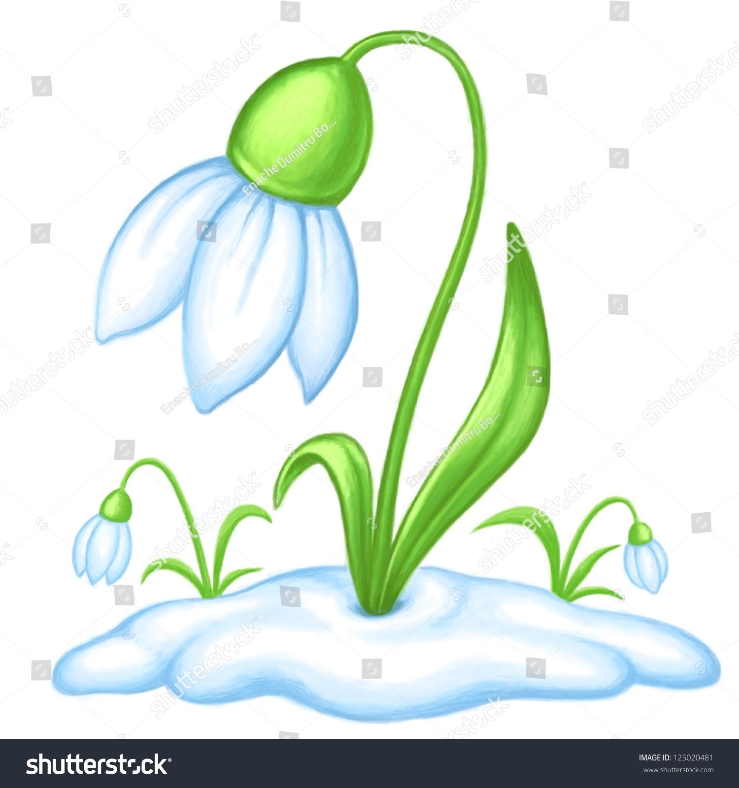 Cartoon snowdrop flowers spring symbols stock illustration cartoon snowdrop flowers spring symbols biocorpaavc