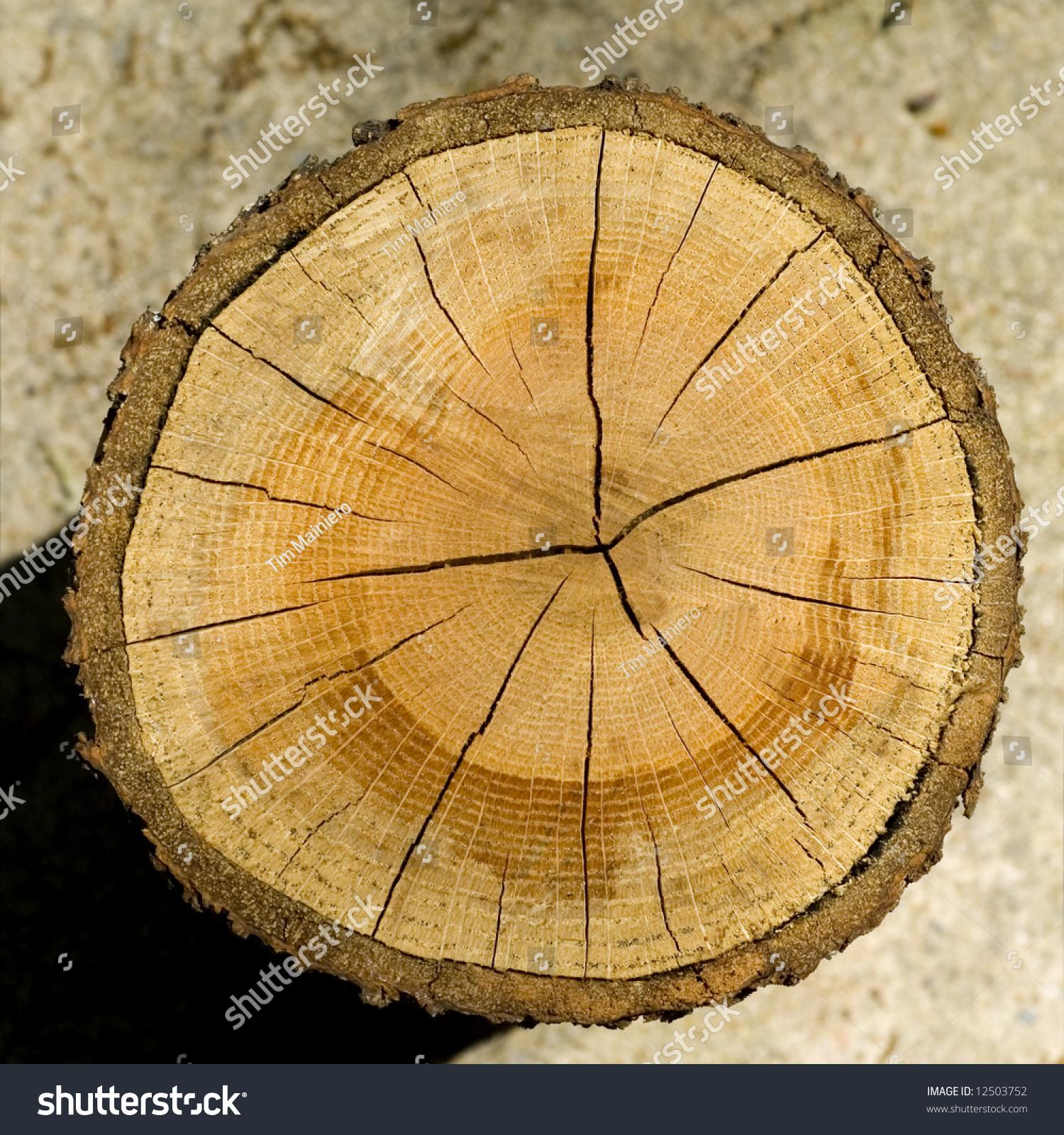 Cut Log Woodgrain Background Texture Stock Photo 12503752