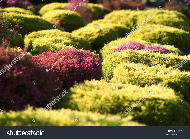 Los cercados de los tipos diferentes que crecen en el for Cercados jardin
