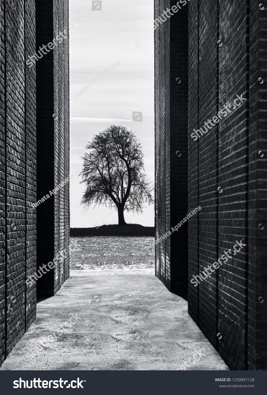Artistic Creative Photo Black White Tree Stock Photo Edit Now 1250897128