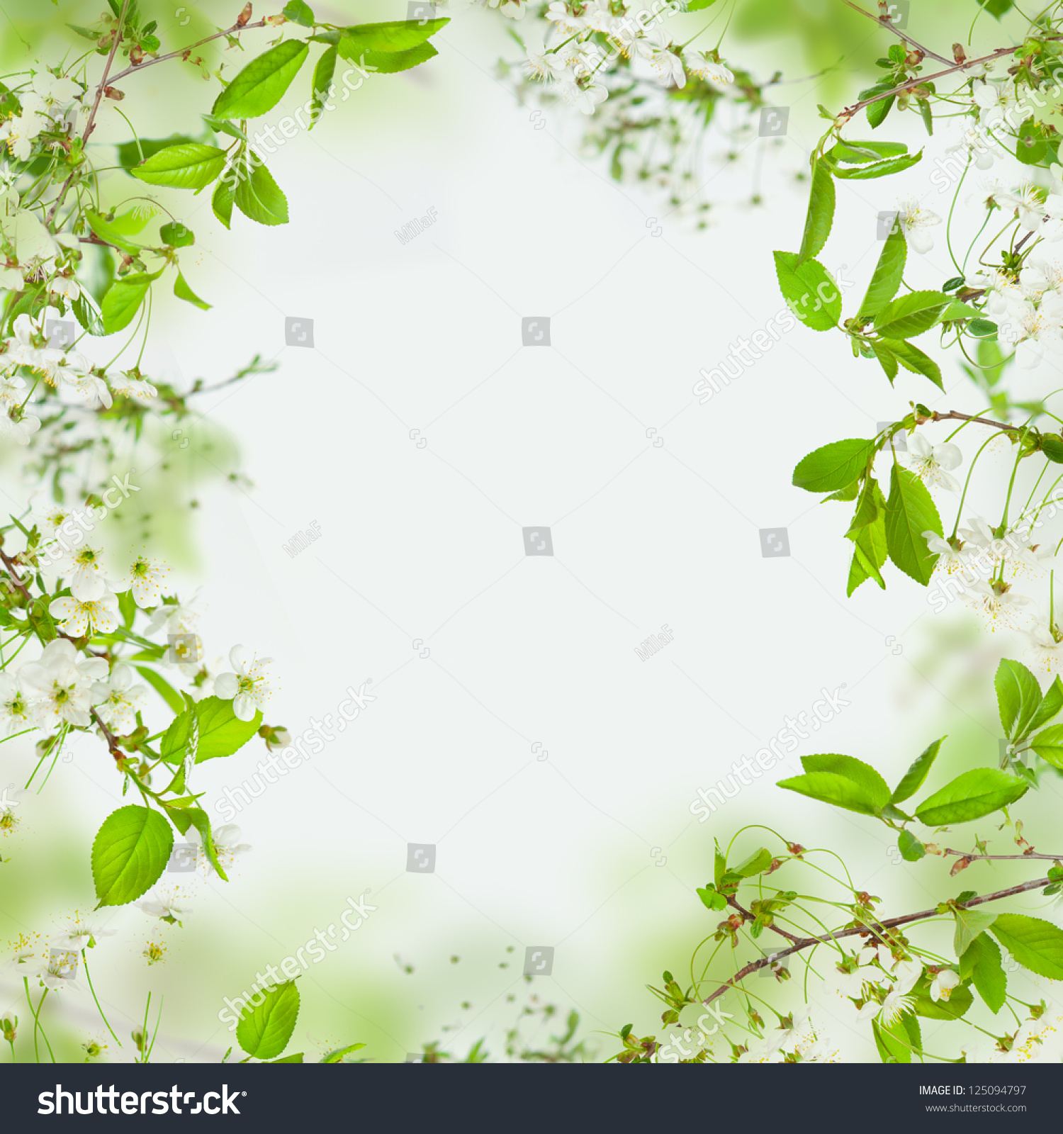 Spring Green Leaves And Flowers Background With Plants: Spring Nature Background Frame Flowers Green Stock Photo