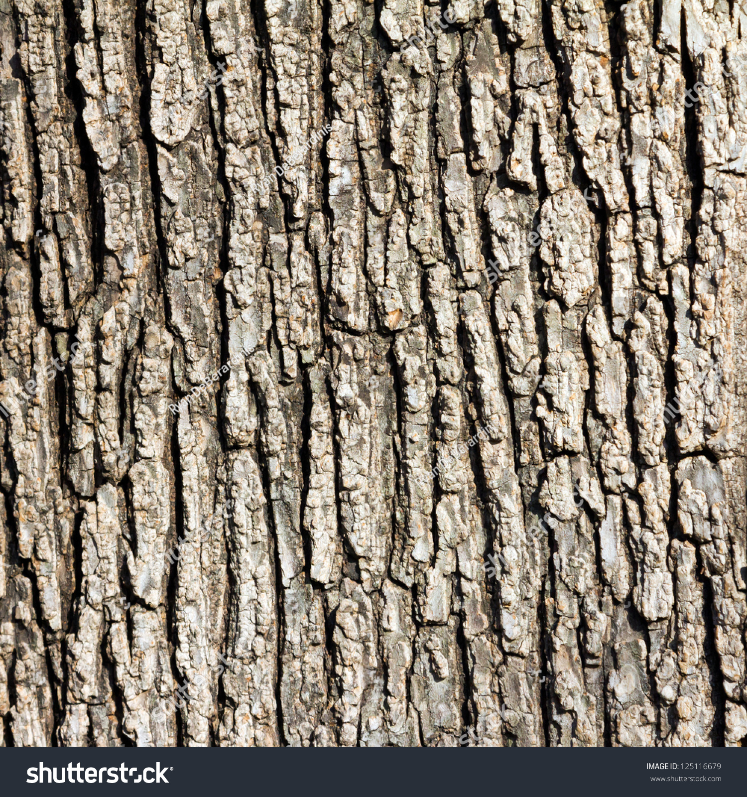 Old wood tree texture background pattern stock photo