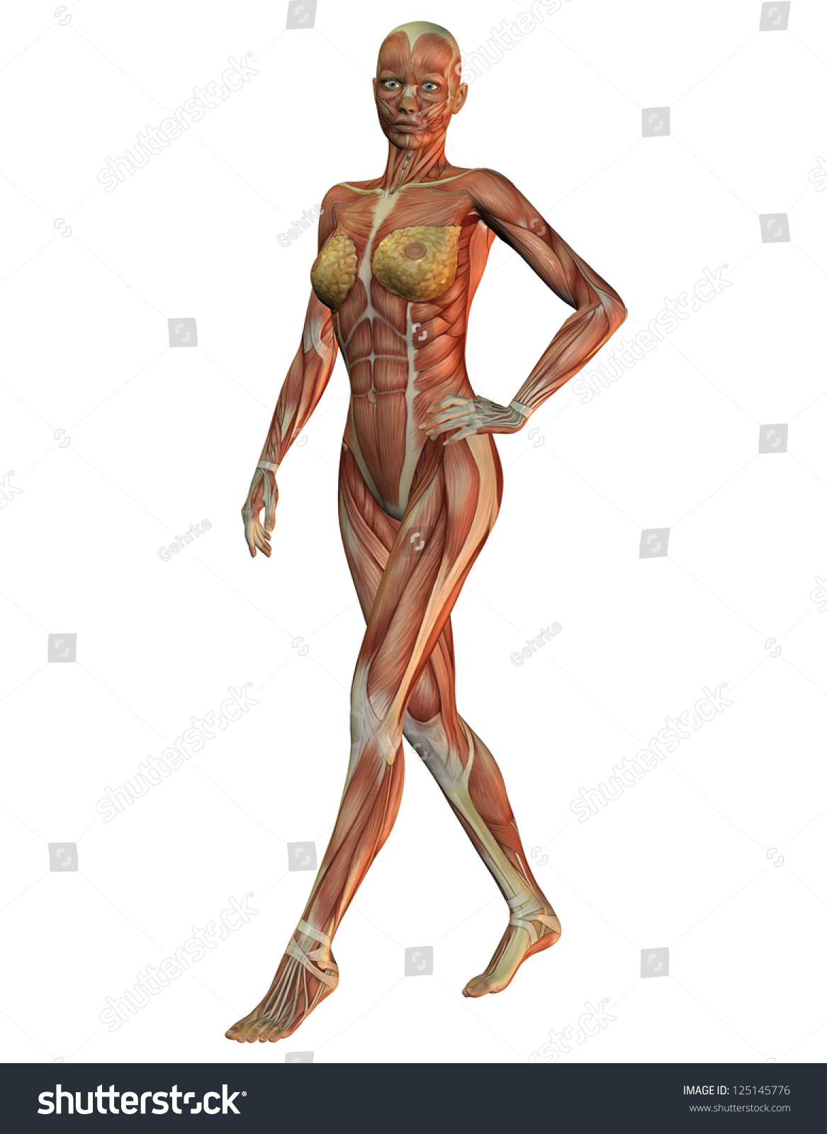 3 D Rendering Anatomy Muscles Woman Running Stock Illustration ...