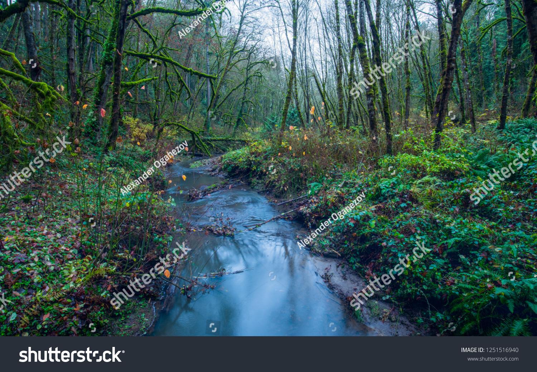 Moss Video Lush Oregon Wwwtollebildcom