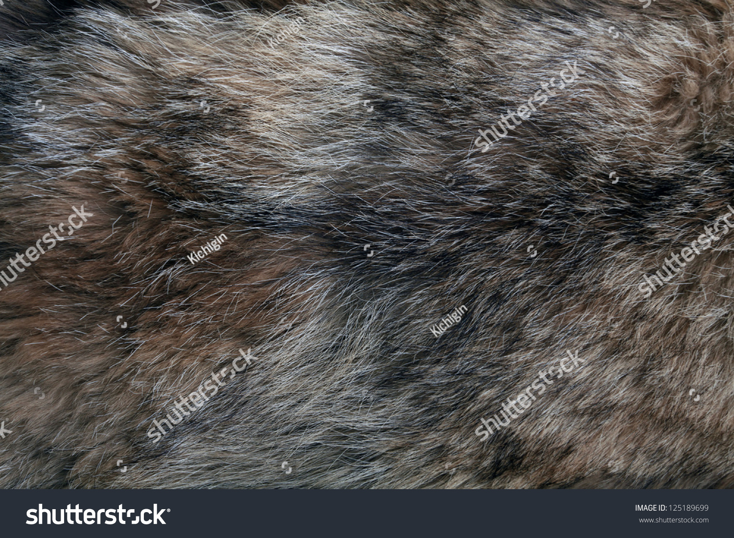 Wolf Fur Texture Of The Gray Wolf Skin Stock Photo ...