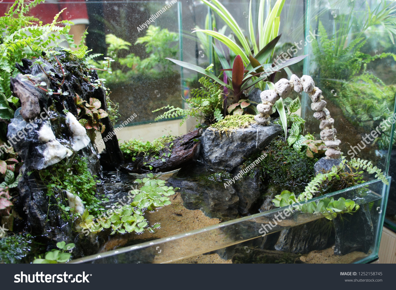 Aquascape Design Small Glass Aquarium Displayed Stock Photo Edit Now 1252158745